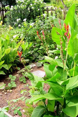 photo Our Jungle