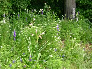 Zanthan Gardens meadow 20070423