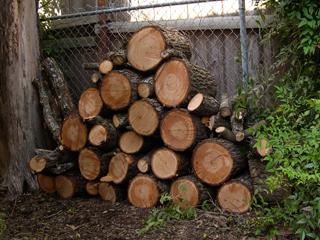 pecan firewood