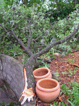 Zanthan Gardens storm damage