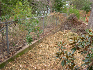 Christmas tree mulch and west border