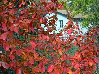 photo: Fall Color Austin Texas