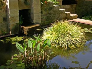 James David Garden