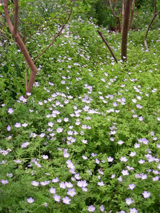 Zanthan Gardens Wild