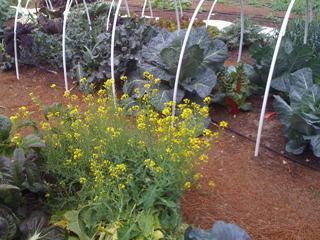 Natural Gardener