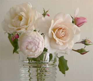 photo: Christmas rose