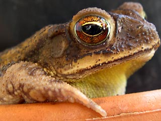 photo: garden toad