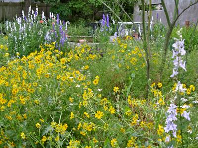 meadow Zanthan Gardens