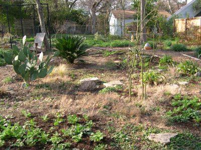 Zanthan Gardens meadow.